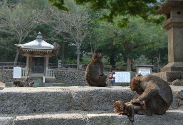 Mt. Takasaki Monkey land National Park